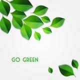 Le vert de source laisse le fond Disparaissent le concept vert Photographie stock