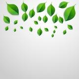 Le vert de source laisse le fond Disparaissent le concept vert illustration libre de droits