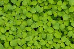 Le vert et nettoient Image libre de droits