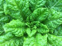Le vert frais Photo stock