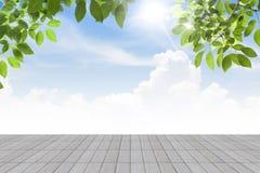 Le vert frais de ressort laisse le ciel de bule avec l'isolat concret de plancher Photo libre de droits