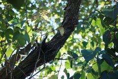 Le vert frais laisse l'auvent recherchant la vue et le tronc Humeur heureuse d'été, Copyspace, foyer sélectif image libre de droits
