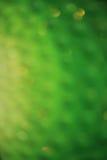 Le vert laisse à fond la surface inégale Photo libre de droits