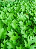 Le vert laisse le champ Image libre de droits