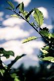 Le vert laisse le ciel bleu photo stock