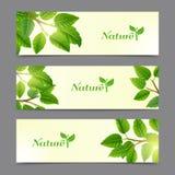 Le vert laisse des bannières d'eco réglées Photographie stock libre de droits