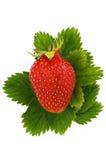 le vert laisse des fraises Photos libres de droits