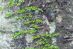 Le vert laisse des milieux de nature, petites feuilles de vert de nature rondes Photos stock