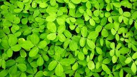 Le vert laisse le fond Texture et fond Photo libre de droits