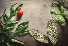 Le vert laisse l'élevage d'usine et le coeur rouge Image libre de droits