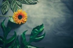 Le vert laisse l'élevage d'usine et la fleur du soleil Photos stock