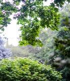 Le vert laisse l'élevage dans l'heure d'été pendant la pluie Image libre de droits