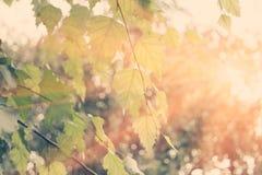 Le vert laisse l'eau de reflectionin et le sunflare, beaucoup d'espace pour le texte, foyer sélectif photos stock