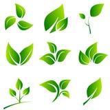Le vert laisse la collection Ensemble de vecteur d'icône de feuilles d'isolement sur le blanc Images stock