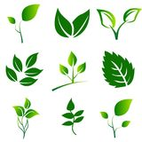 Le vert laisse la collection Ensemble de vecteur d'icône de feuilles d'isolement sur le fond blanc Image stock