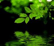 Le vert laisse la réflexion Photos stock