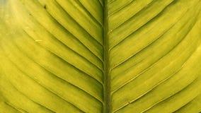 Le vert laisse la texture Photos libres de droits