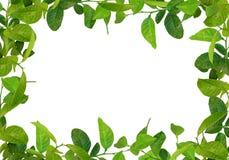Le vert laisse la trame Images stock