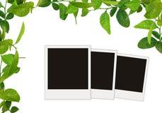Le vert laisse la trame Photos stock