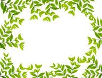 Le vert laisse la trame Photographie stock