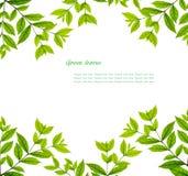 Le vert laisse la trame Photo libre de droits