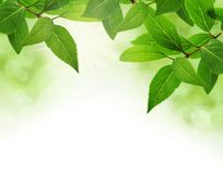 Le vert laisse le cadre