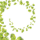 Le vert laisse le cadre d'isolement sur le blanc ENV 10 Photographie stock libre de droits