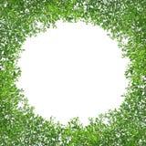 Cadre vert de feuille d'isolement image stock