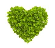 Le vert laisse le coeur Images libres de droits