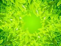 Le vert laisse le fond Photos stock