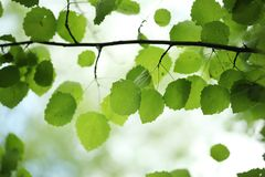 Le vert laisse le fond image stock