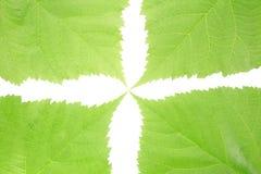Le vert laisse le fond Photos libres de droits