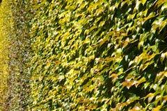 Le vert laisse le fond photo stock