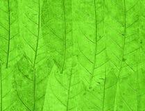Le vert laisse le fond Photo libre de droits