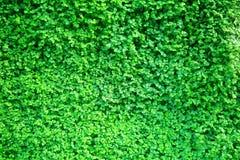 Le vert laisse le fond Photographie stock