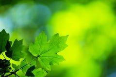 Le vert laisse le fond Images stock