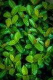 Le vert laisse le fond Image libre de droits