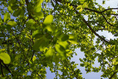 Le vert laisse le fond Images libres de droits