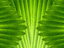 Le vert laisse le fond abstrait Images libres de droits