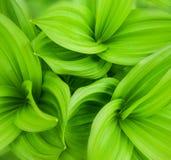 Le vert laisse le fond abstrait Photos libres de droits