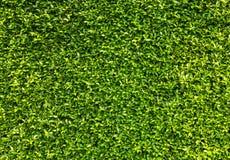 Le vert laisse le fond de mur Photographie stock