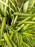 Le vert laisse le fond de texture Photographie stock libre de droits