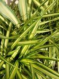 Le vert laisse le fond de texture Photographie stock
