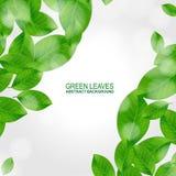 Le vert laisse le fond de vecteur Photos libres de droits