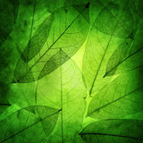 Le vert laisse le fond de vintage Photos stock