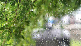 Le vert laisse le fond, gouttelettes d'eau sur le vitrail Images stock