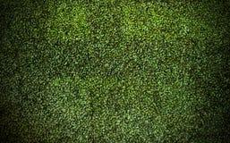 Le vert laisse le fond, papier peint Photos stock