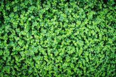 Le vert laisse le mur image libre de droits