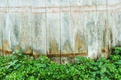 Le vert laisse le mur et le bois Images stock