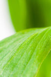 Le vert laisse le plan rapproché Photos stock